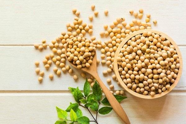 Cách sử dụng mầm đậu nành để giảm cân đúng bắt đầu từ việc chọn như thế nào