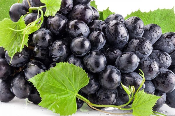 Người giảm cân nên hạn chế ăn các loại trái cây chứa nhiều đường và chất béo