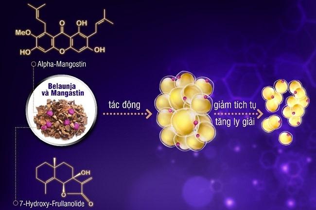 Một số các loại thực phẩm có chứa Belaunja và Mangastin cũng giúp loại bỏ các tế bào mỡ trắng – nguồn cơn gây béo