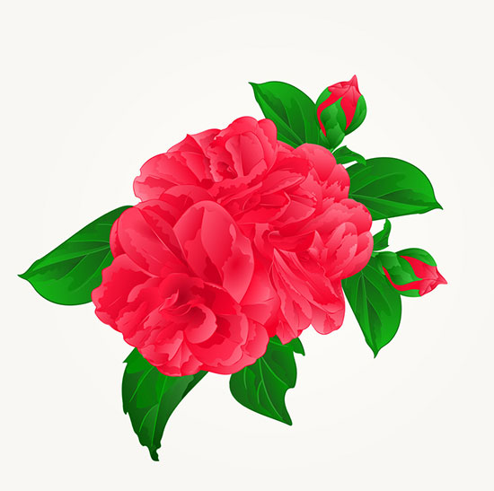 Tết là dịp hoa trà my nở rộ nhất
