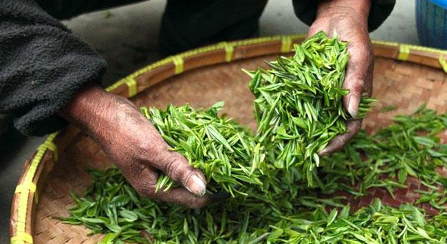 Sencha được sản xuất tại Nhật Bản với quy trình khép kín
